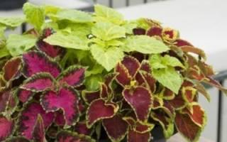 Комнатные растения, улучшающие здоровье семьи