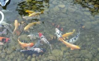 Разведение рыбы в искусственных водоемах: подходящие виды и особенности рыбоводных бассейнов