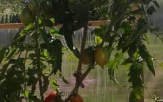 Как вырастить ранние помидоры, подготовка семян, рассада, выращивание в открытом грунте, правильный уход