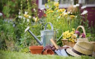 Как спланировать будущий садовый сезон: основные этапы, видео