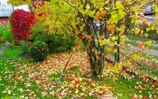 Октябрь: в плодовом саду, цветниках, на участке и огороде