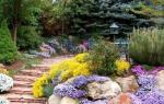 Выбираем цветы для альпийской горки, многолетние растения, кустарники
