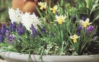 Какие растения можно выращивать за окном