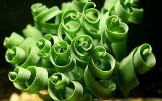 Экзотические цветы, которые можно вырастить дома