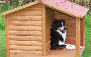 Строим конуру для собаки своими руками + видео