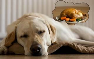 Ученые выяснили какие сны видят животные