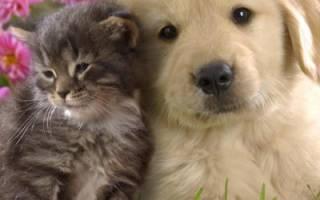 Обустраиваем жилье для домашних питомцев на примере будки собаки. Видео