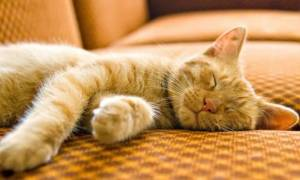 Видео как котёнок спит и дергает лапками
