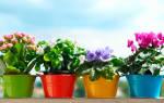Банановая кожура как удобрение комнатных растений — подкормка цветов настоем и другие способы