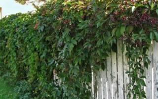Вертикальное озеленение: красиво и доступно