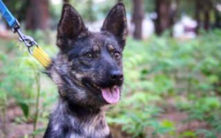 На Украине Сергей Чулиба встретился со своим псом