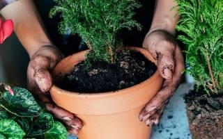 Подкормка для цветов, они будут расти «как на дрожжах»