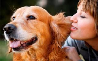 В Норвегии собаки заболели неизвестной болезнью