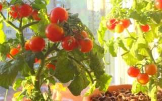 Мини-огород в цветочном горшке