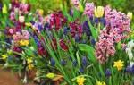 Растения весенних цветников: как выбрать и когда посадить