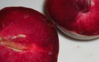 Сорта чёрного абрикоса: подробное описание, особенности посадки и ухода с фото и видео
