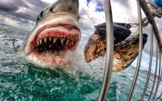 Огромная акула попала на кадры съемки в Австралии