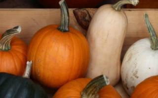 Советы по хранению урожая в домашних условиях