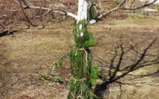 Обработка яблонь от болезней и вредителей осенью: опрыскивание, побелка и другие способы