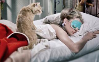 Почему кошки постоянно спят рядом с человеком