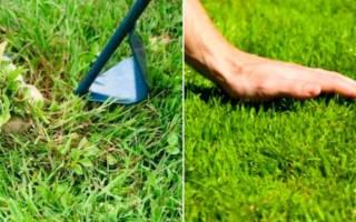 Трава для газона: как выбрать семена газонной травы