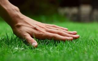 Удобрения для газона: когда и чем удобрять газон