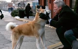 В Шотландии собака умерла вслед за своим хозяином