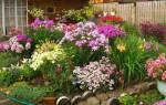 Неприхотливые растения и творческий подход – красивый сад без особых хлопот