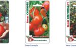 Морозостойкие сорта помидоров: какие выбрать, как ухаживать