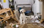 Собака разорвала книгу о воспитании собак