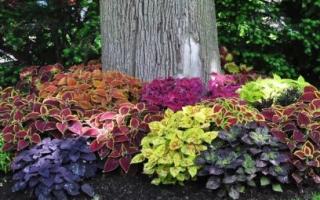 Приствольные клумбы вокруг дерева: идеи оформления