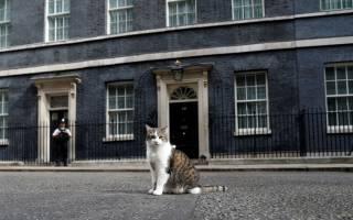 Премьер-министр Англии завёл себе щенка