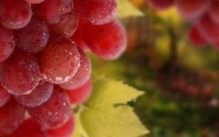 Уход за виноградом: правильная обрезка, подкормка удобрениями