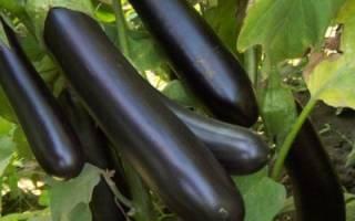 Выращивание баклажанов: как сажать и ухаживать, чтобы получить большой урожай
