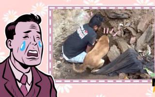 Собака унюхала своих щенков под домом и показала спасателям