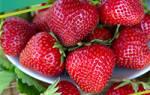 Садовый чубушник (мнимый жасмин): выращивание, уход, эффектные сорта