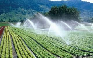 Выращивание овощей в ящиках: подготовка почвы, обработка, посадка растений, уход