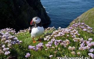 Армерия : интересные виды с фото, особенности ухода и размножения