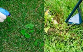 Как бороться с сорняками на газоне, гербициды избирательного действия