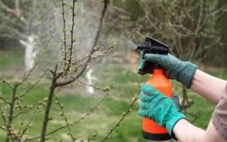 Как использовать моющее средство для обработки плодовых деревьев и ягодных кустарников