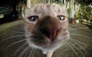 Необычный окрас носа мешает кошке найти хозяина