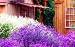 Посадите в саду источник здоровья!