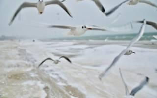 Научная экспедиция в Арктике проводит подсчет чаек