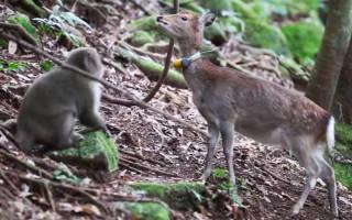 Видео как обезьяна пытается остановить воду идущую из трубы