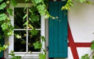 Выбираем вьющиеся растения для сада и дачи: плетущиеся многолетние и др.