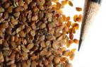 Иберис: секреты выращивания и размножения неприхотливого растения
