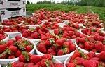 Выращивание зелени в теплице для себя и как бизнес