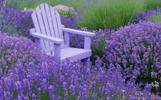 Низкорослые цветы для клумб: многолетние, однолетние, почвопокровные