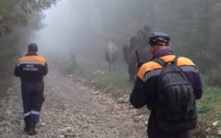Видео верблюдов в горах под Новороссийском