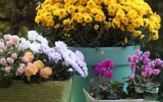 Как обустроить террасу своими руками: выбор декора и растений